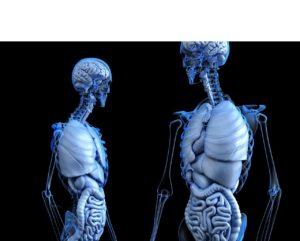 Anatomie Frau und Mann