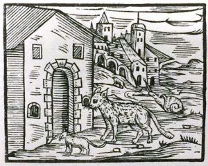 Katze Maleficarum